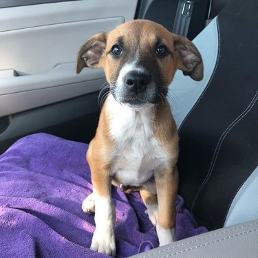 cute puppy in car seat