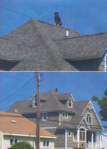 Dog sitting on very high roof.
