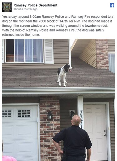 Facebook post from police department about dog stuck on roof.