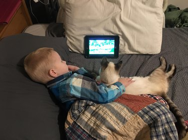 Cat and child cuddling while watching something on a tablet.