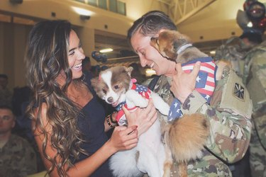 dogs greet returning soldier