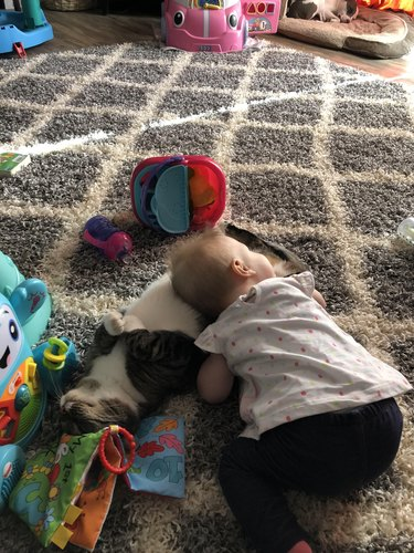 Toddler listening to cat's stomach.