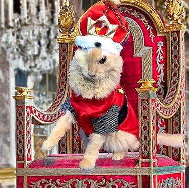 Sir Thomas on his throne.
