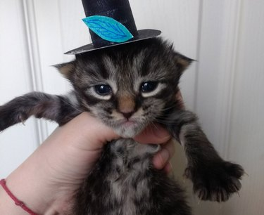 Tiny cats in tiny hats? Tell us more