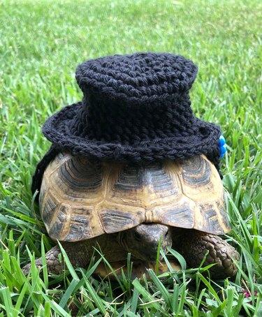 tortoise in crocheted top hat