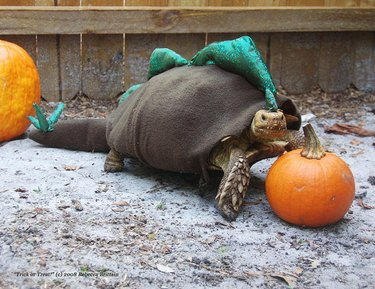 tortoise in dinosaur costume