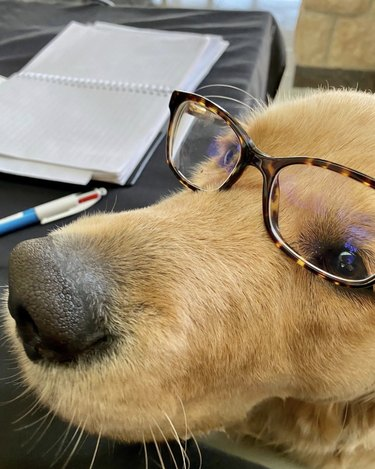 dog in glasses next to pen and notebook