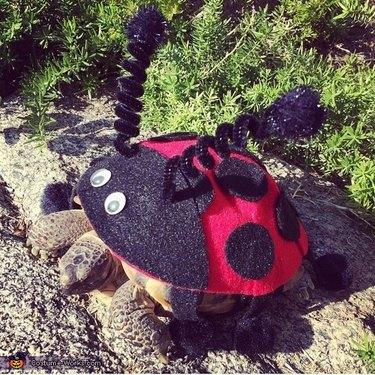 tortoise in ladybug costume