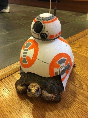 tortoise in BB8 Star Wars costume
