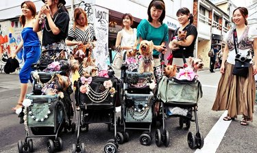 stroller parade of people and dogs