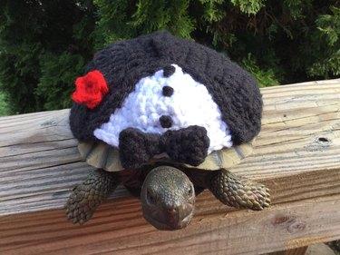 tortoise in crocheted tuxedo