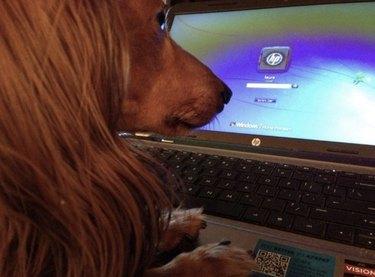 dog logging into computer