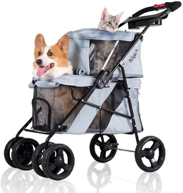 cat and dog in stroller together
