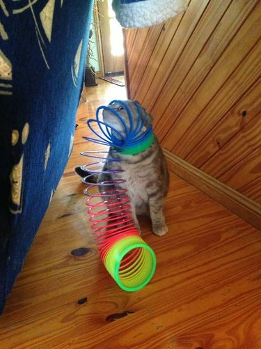 20 animals getting stuck in all the things