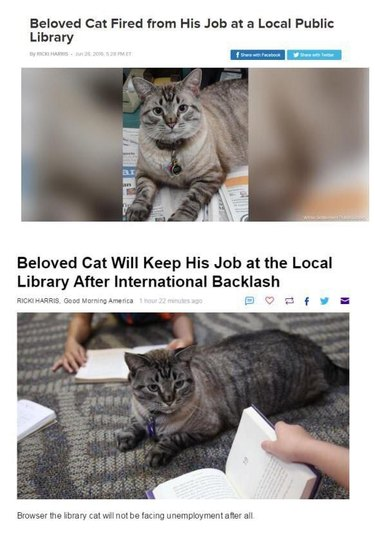 Headlines about cat being fired and then rehired at library.
