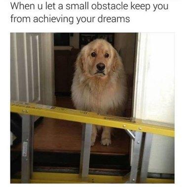 Dog standing in doorway behind sideways ladder