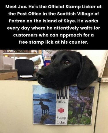 Dog at post office with sign proclaiming him official stamp licker.