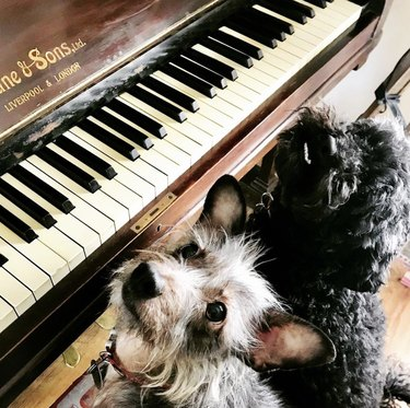 two dogs sitting on piano bench