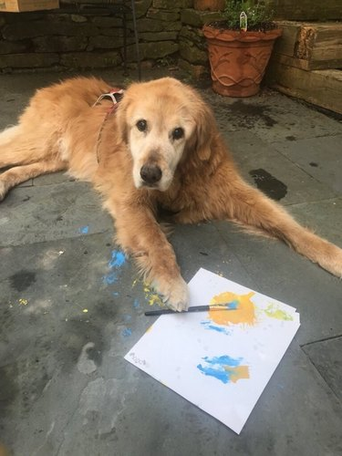 Dog with paintbrush and paper.