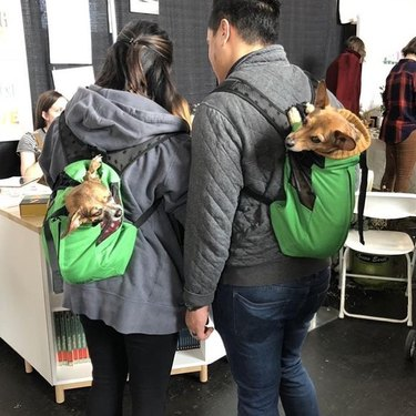 two dogs in bags commiserate with one another