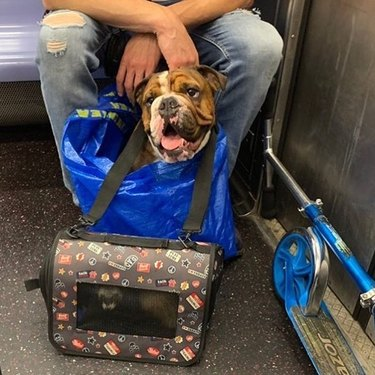 dog in bag and ferret in bag ride NYC trainline
