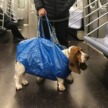 droopy dog in bag on NYC train