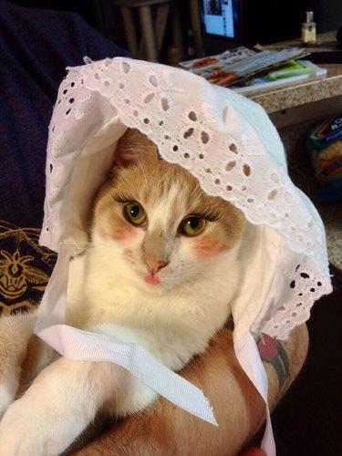 Cat in makeup wearing a doll bonnet