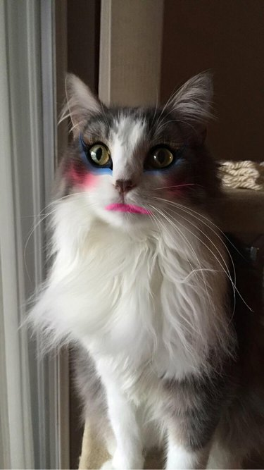 Cat wearing makeup.