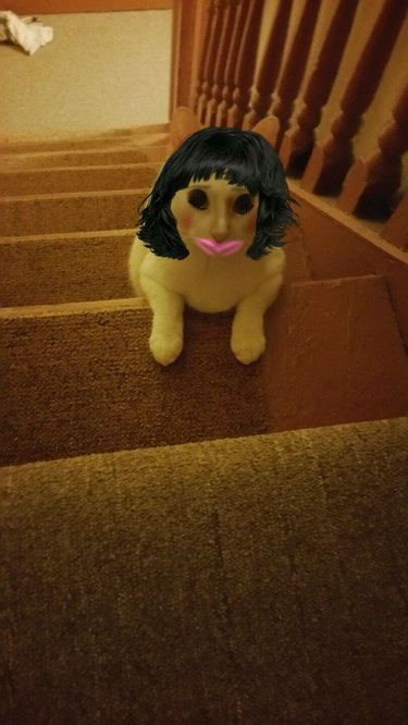 A very scary picture of a cat using a makeup and hair app