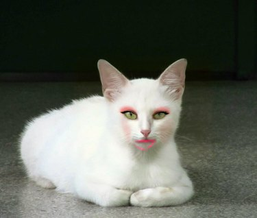 Cat with bad makeup