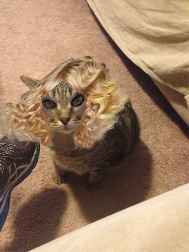 Cat looking very fancy with blond hair and makeup