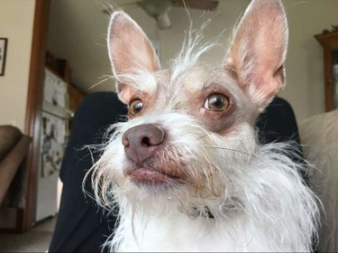 unconventional looking dog