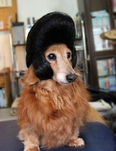 Dog in Elvis wig