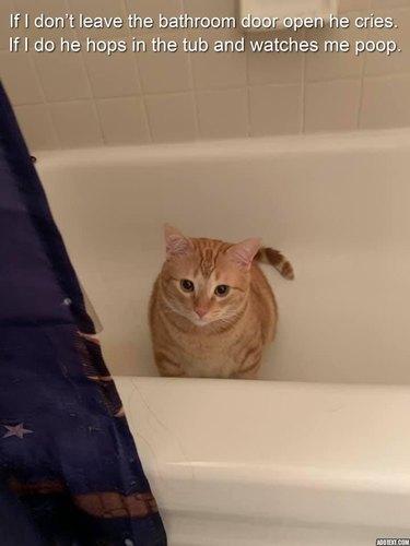 Cat sitting in empty bathtub