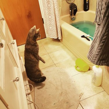 Cat on its hind legs looking into bathtub