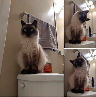 Cat looking at owner in bath with confusion
