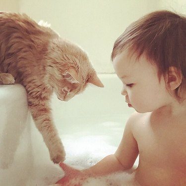Cat dipping paw into baby's bath