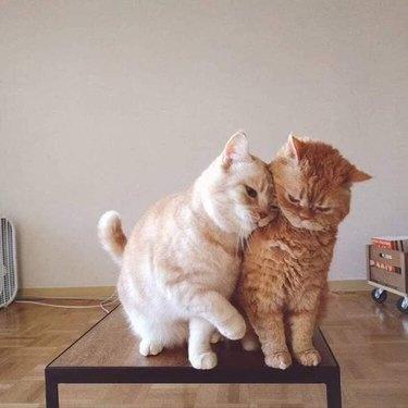 cat leans into second cat