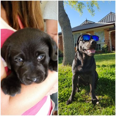 Side-by-side photos of dog as a shy puppy and an adult wearing sunglasses.