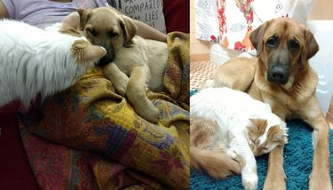 Side-by-side photos of cat and dog as a puppy and an adult.