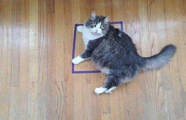 A cat resting in a tape square
