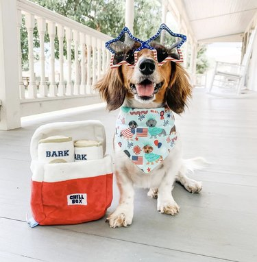 dog in star shaped sunglasses