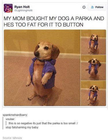 Fat little dog can't button his jacket!