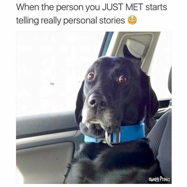 Dog looking alarmed