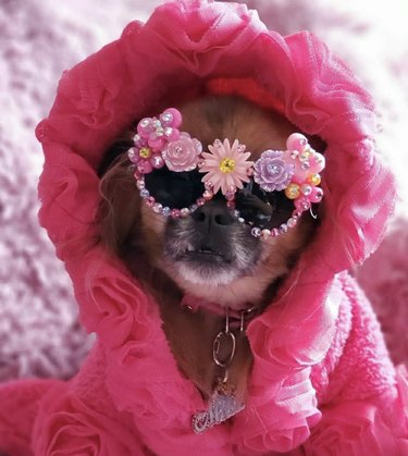 dog in floral sunglasses