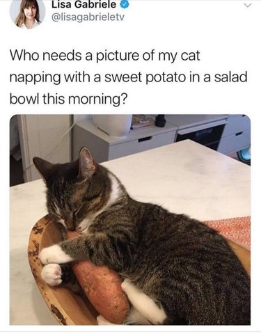Cat napping in salad bowl with sweet potato