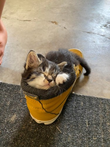 Kitten sleeping in boot