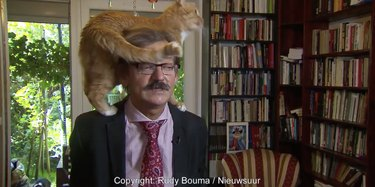 Watch This Academic Give a Very Chill TV Interview With a Cat on His Head