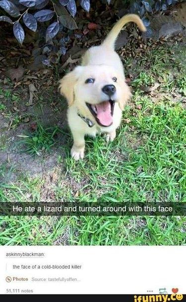 Happy puppy ate a lizard!