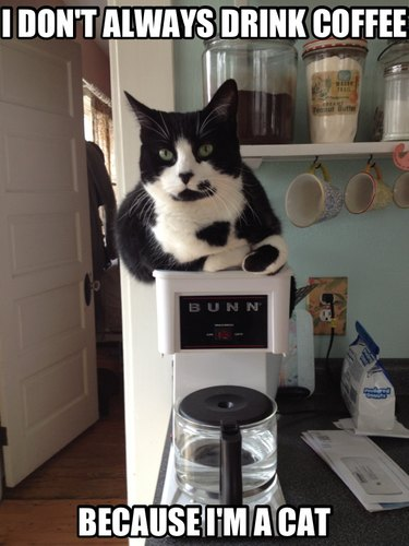 Cat sitting on coffee maker